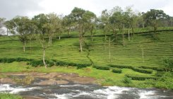 Association appeals to Govt to revive tea industry