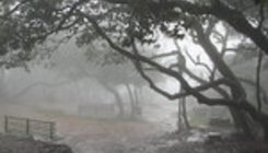 Could Mahabaleshwar become wettest place on Earth?
