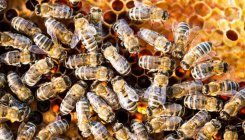 MP: 22 children injured in attack by honeybees