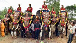 Mighty tuskers get ready for mega Dasara march