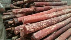 Rs 44L worth of red sanders seized from warehouse