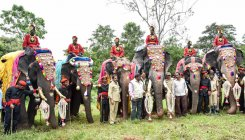 Dasara elephants covered under insurance
