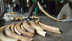 Yahoo Japan ending ivory sales, joining competitors