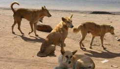 Navy's 'dog-fight' to clear canines from Goa airport