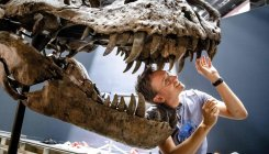 T rex had an air conditioner in its head: Study