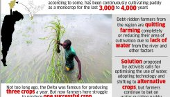 Struggle to regain farming glory in Cauvery Delta