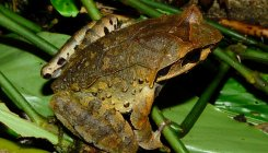 Frogs who were married for rain, divorced to stop it