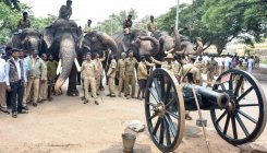 Dasara elephants get familiar with cannon firing