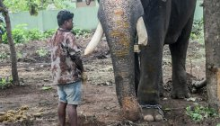 Delhi: Missing elephant, Laxmi, found after two months