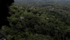 'Earth lost forest area the size of India since 90s'