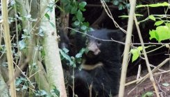 18-month-old sloth bear trapped in snare rescued