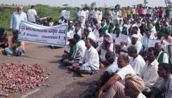 Onion growers protest price crash, dump produce