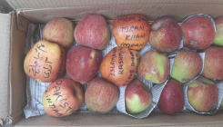 'Pakistan Zindabad' 'Azadi' scribbled on Kashmir apples