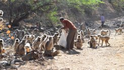 And now an exclusive park for monkeys in Karnataka