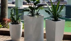 Plants don't improve indoor air quality: Study