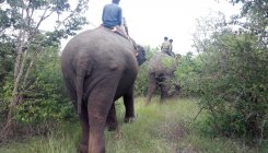 Elephants destroy crops worth lakhs of rupees