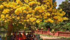 Discovering Bengaluru: Lalbagh was earlier five gardens