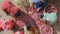 Flood of low-grade onions; price may hit Rs 100/kg