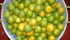 Disease turns orange harvest bitter in Kodagu