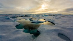 'Arctic Ocean may be ice-free for part of year by 2044'