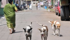 Sterilisation camp held for canines