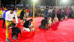 Two-day dog show gets good response in Mangaluru