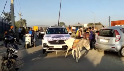 Angry customer makes donkey pull MG Hector in Udaipur