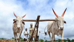 43 lakh Andhra farmers got funds under PM-KISAN