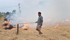 IIT-M to develop technology to tackle stubble burning