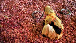 Govt to make 1 lakh tons of onion buffer stock in 2020