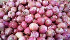 Imported onions to give Centre teary eyes - here's why