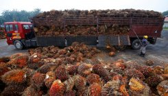 India stops palm oil import from Malaysia: Report
