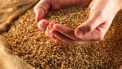 B'desh upset with Russia's decision to cut wheat export
