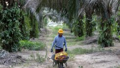 India's import curbs big blow to Malaysian palm oil