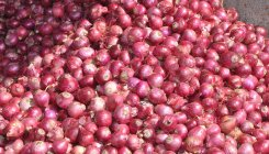 Centre to send 2000 tonnes onions to five states