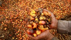 How palm oil plantation contributes to global warming