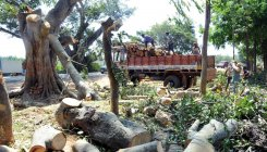 2,318 trees to be felled for NH-173 widening