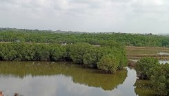 Greens cry foul over vanishing wetlands of Mumbai