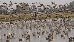 '37 Indian wetlands sites of international importance'