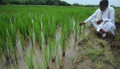 'Draft seed bill leaves farmers at mercy of companies'