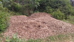 Indiscriminate dumping of arecanut husk worries locals