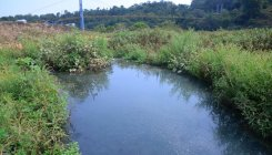 Increasing pollution of River Tunga a cause for concern