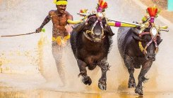 This Kambala Jockey can give Bolt a run for his money