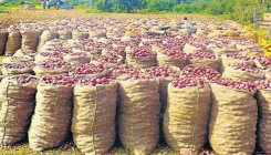 States short change Centre on onion imports