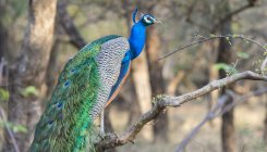 Nearly 400 Indian bird species declined in 25 years
