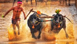 Kambala: The road to race