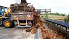 'Malaysia aims to resolve palm oil spat with India'
