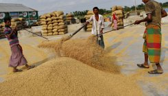 As rice exports fears grow, India may continue selling