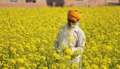 'Farmers forced to sell mustard below support price'