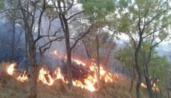 300 acres of forest land destroyed in fire